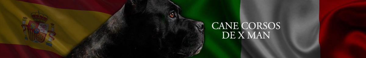 cane-corso-1