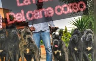 la historia del cane corso juanma morato 5