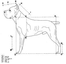 crisis cane corso