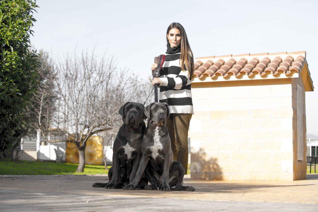 comprar cachorro de cane corso3