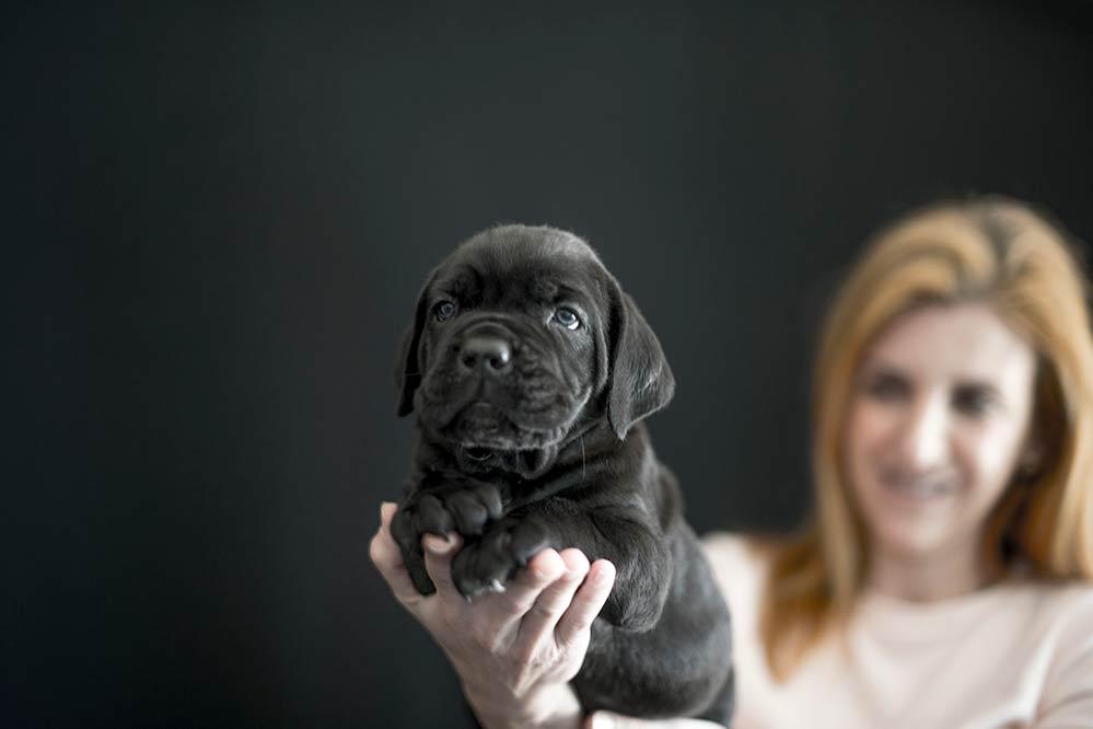 precio cachorro cane corso 01