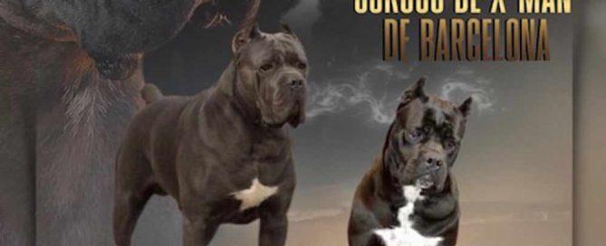 Nueva camada los mejores cachorros de cane corso X-man p