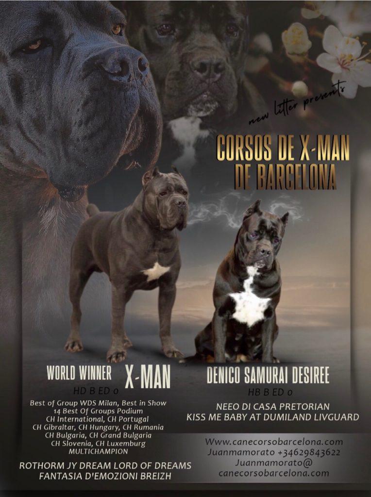 breed-criadores-cane-corso-desiree