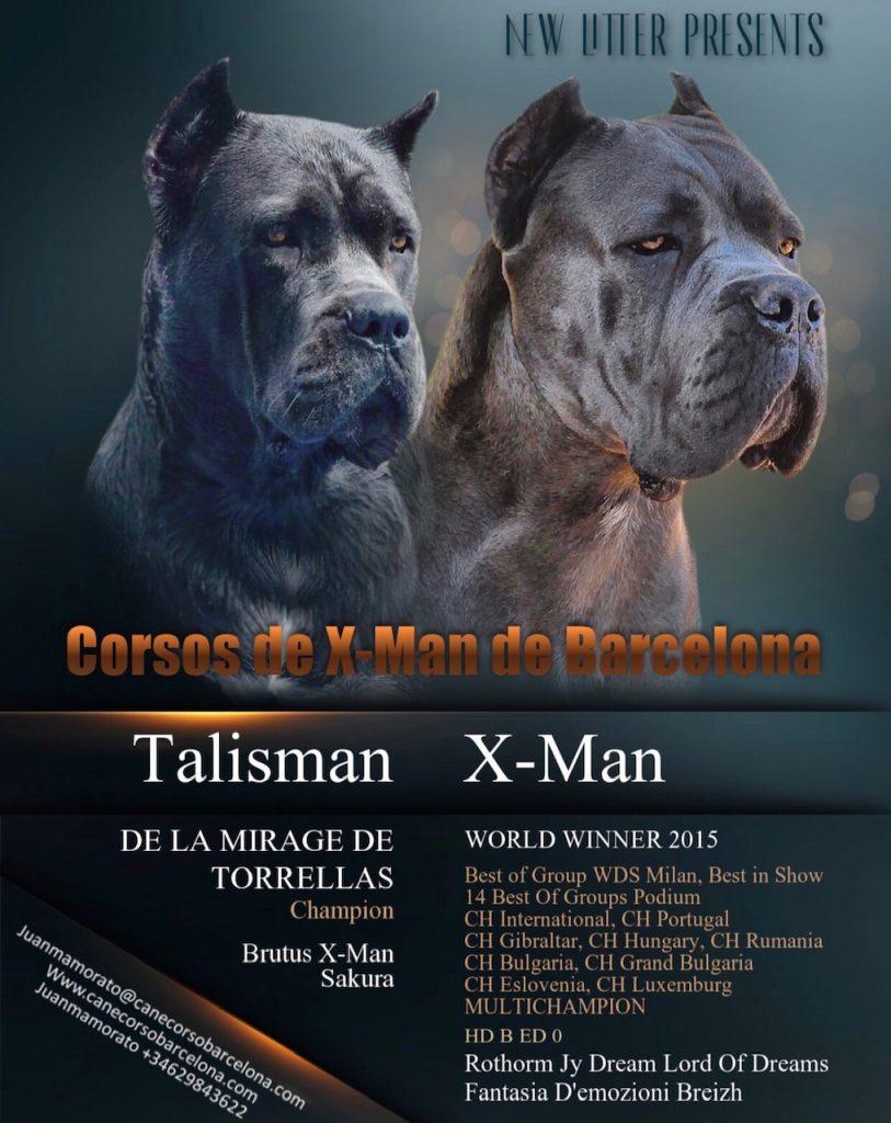 breed-criadores-cane-corso-talisman