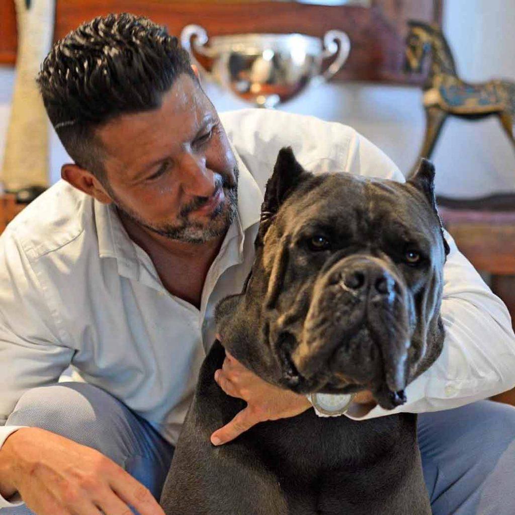 Buy dog cane corso in in Boston-Massachusetts and cane corso puppies for sale in Boston-Massachusetts.