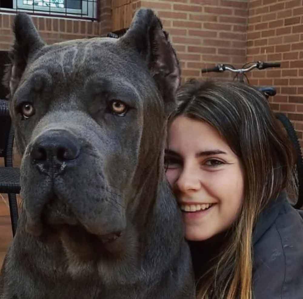 buy dog cane corso in NY-NUEVA YORK - MANHATTAN and puppies for sale dog italian mastiff1