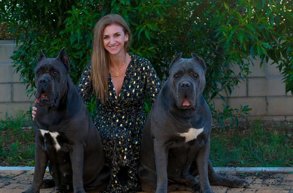 Comprar perro cane corso en Madrid y venta de cachorros de cane corso en madrid-España2
