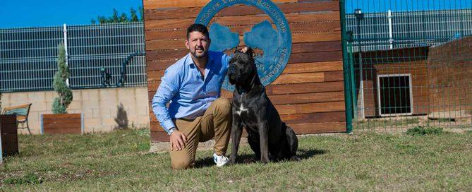 comprar perro cane corso en Guadalupe Mexico y venta de cachorros de cane corso en Guadalupe Mexico