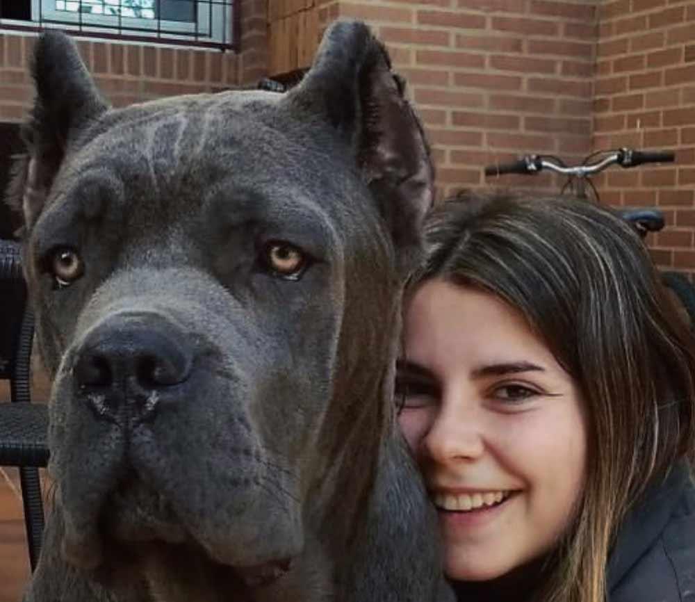 comprar perro cane corso en San Diego California y venta de cachorros de cane corso en California5