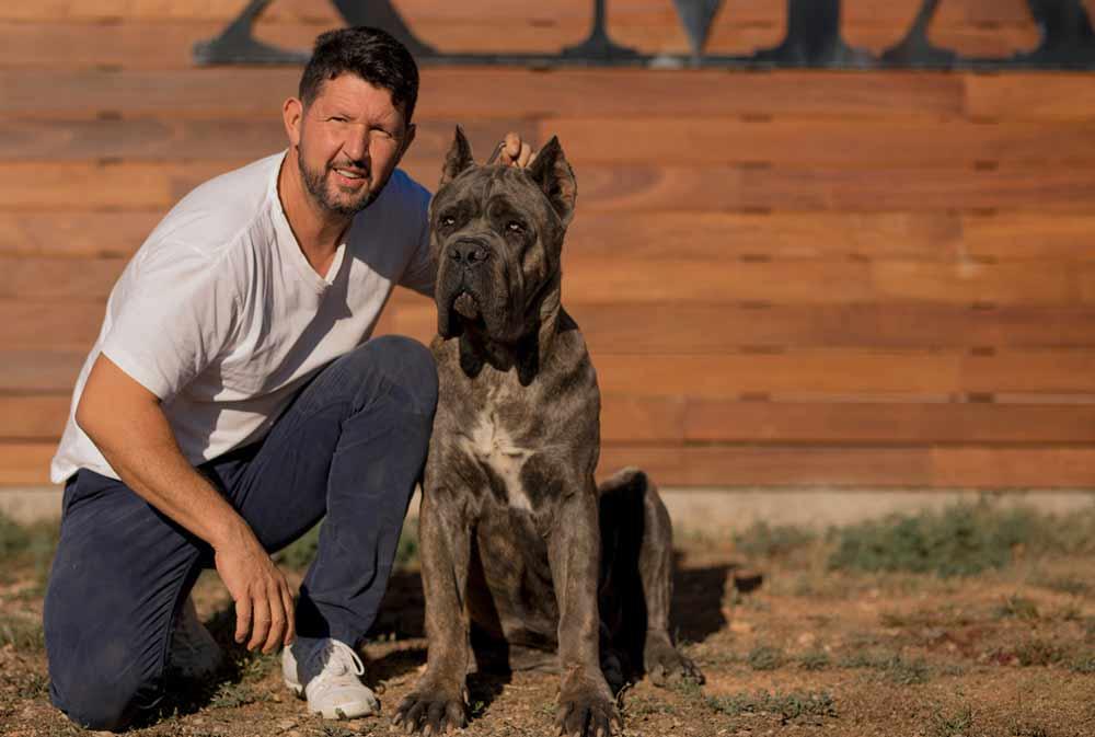 comprar perro cane corso en Monterrey y venta de cachorros de cane corso en Monterrey y criador de cane corso en Mexico-Monterrey