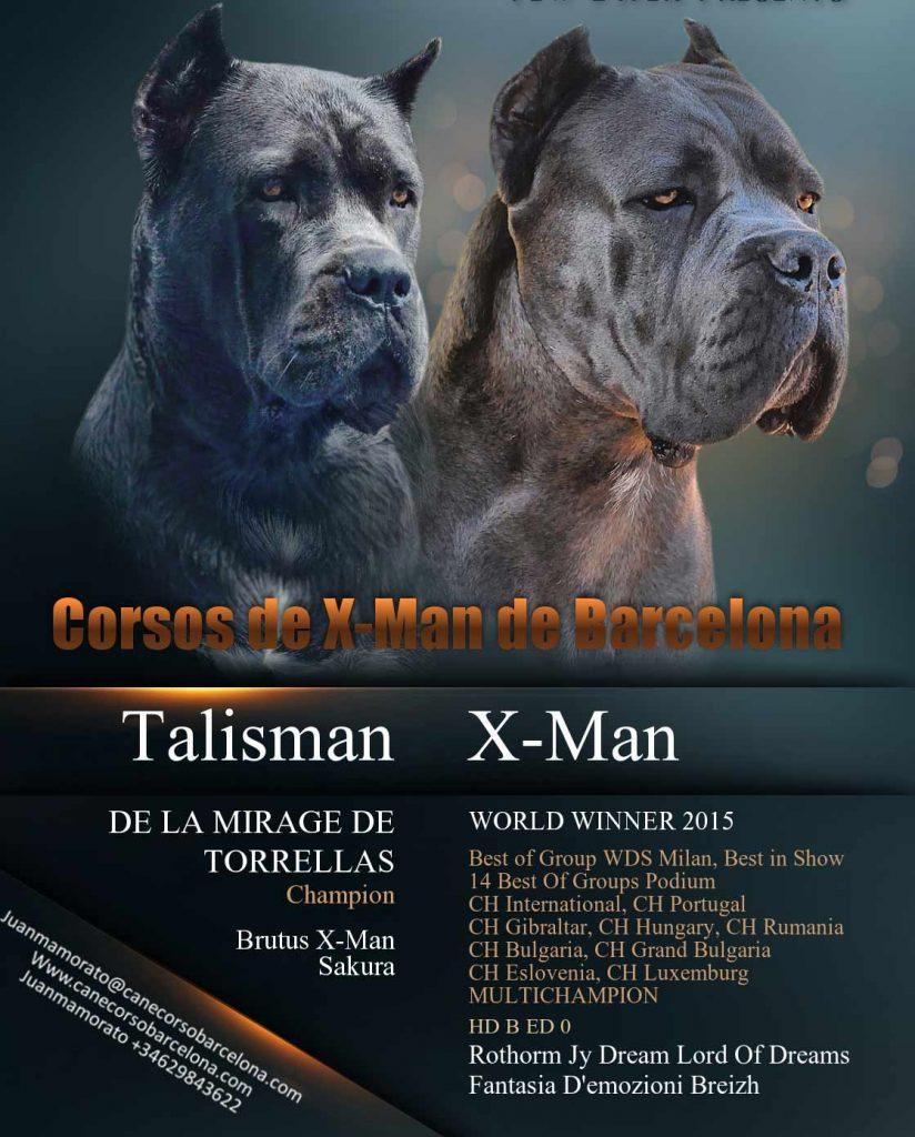 comprar perro cane corso en Monterrey y venta de cachorros de cane corso en Monterrey y criador de cane corso en Mexico-Monterrey1