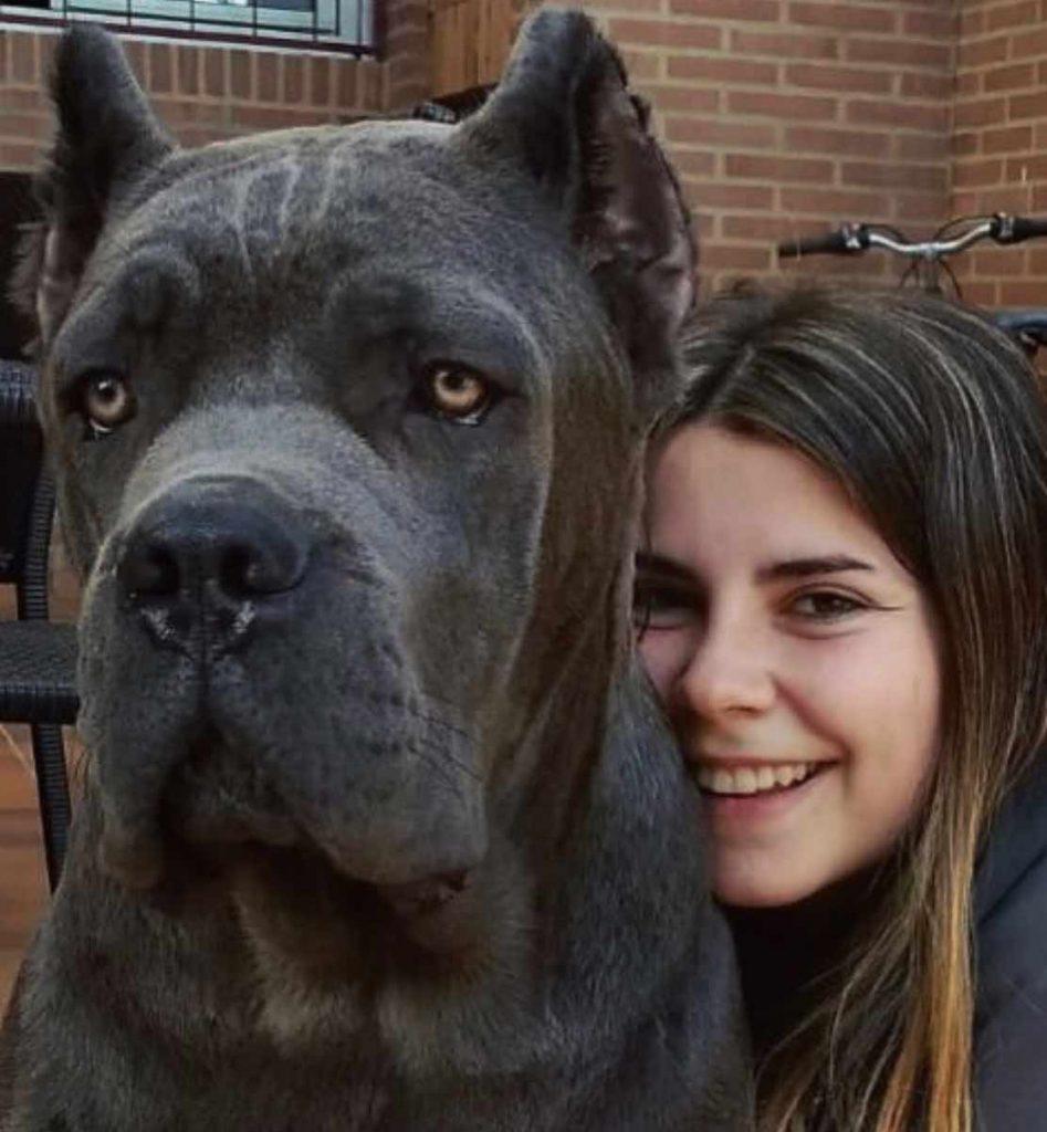 Comprar cane corso en Montevideo Uruguay y Venta cachorros de cane corso y Criadores de Cane corso Uruguay3