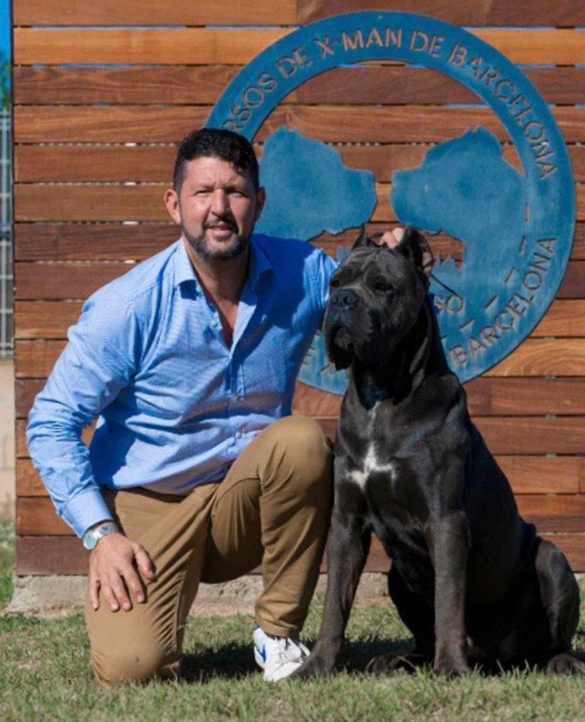Comprar cane corso italiano en Republica Dominicana y venta de cachorros de cane corso en Republica Dominicana2