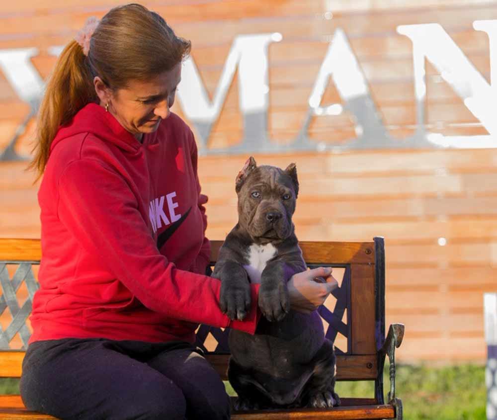 Rietcorso kopen in colonia Duitsland en rietcorso puppies te koop in colonia duitsland3