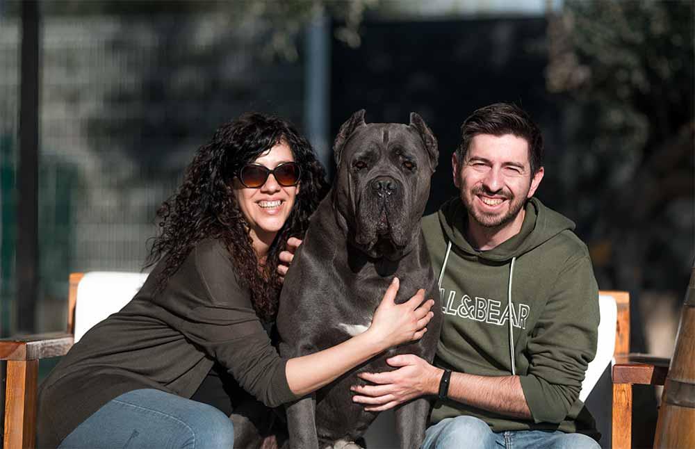 Comprar cane corso en Guadalajara Mexico y Venta de cachorros de cane corso en Guadalajara Mexico3