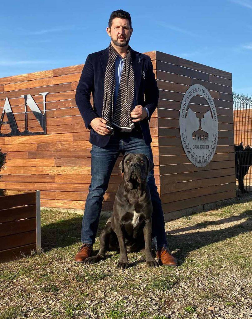 buy cane corso in Salvador de Bahia Brasil comprar cane corso em salvador da bahia brasil e filhotes de cane corso
