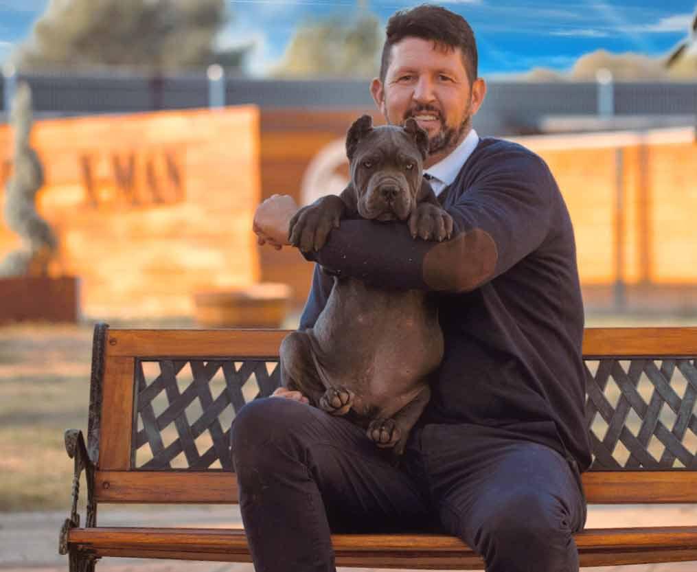buy cane corso in Salvador de Bahia Brasil comprar cane corso em salvador da bahia brasil e filhotes de cane corso3