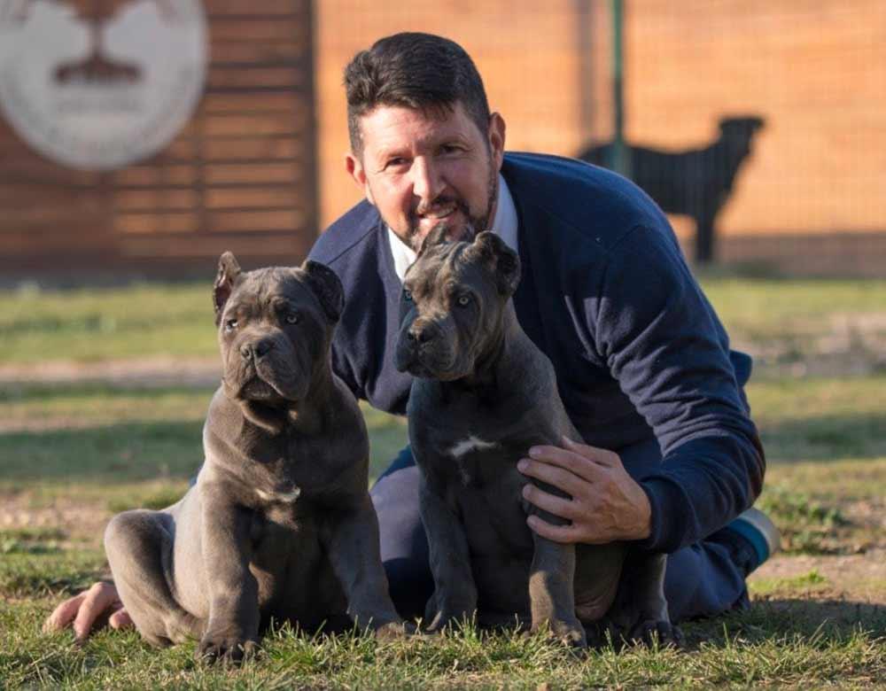 buy cane corso in Salvador de Bahia Brasil comprar cane corso em salvador da bahia brasil e filhotes de cane corso4