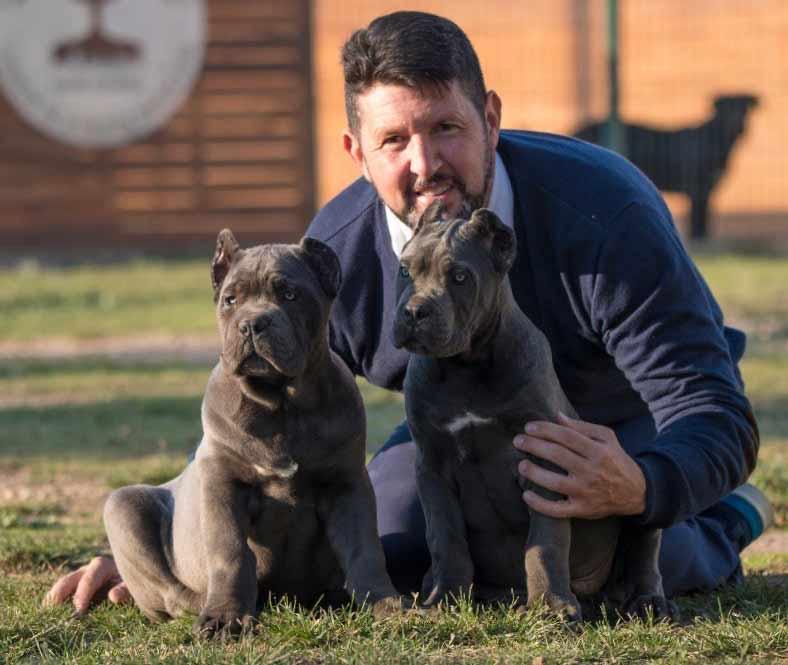 buy cane corso in Tianjin China and cane corso puppies for sale in Tianjin China 在中國天津購買甘蔗corso和在中國天津出售甘蔗corso幼犬1