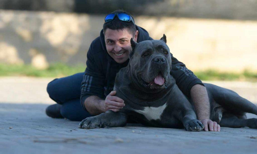 compra cane corso en Santo domingo Republica Dominicana y venta de los mejores cachorros de cane corso