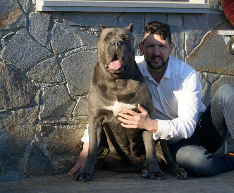compra cane corso en Santo domingo Republica Dominicana y venta de los mejores cachorros de cane corso2