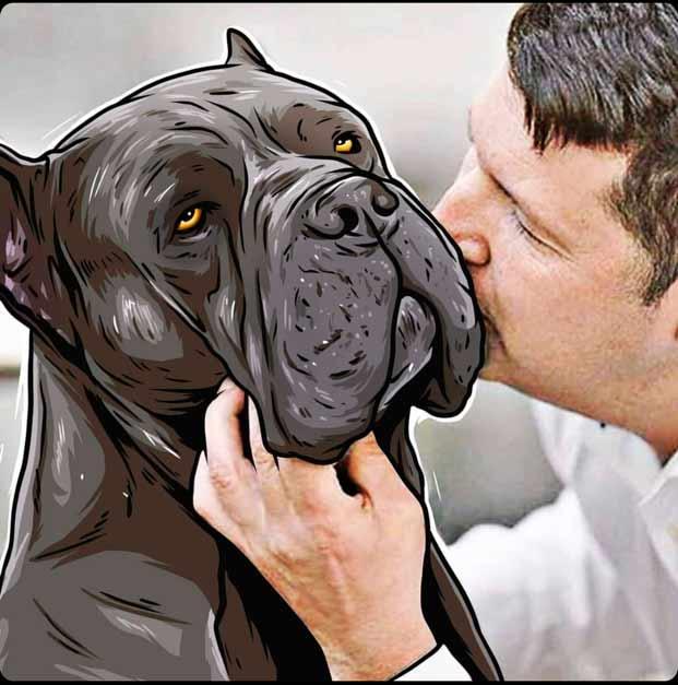 comprar cane corso en Monterrey Mexico y Venta de los mejores cachorros de cane corso en Monterrey
