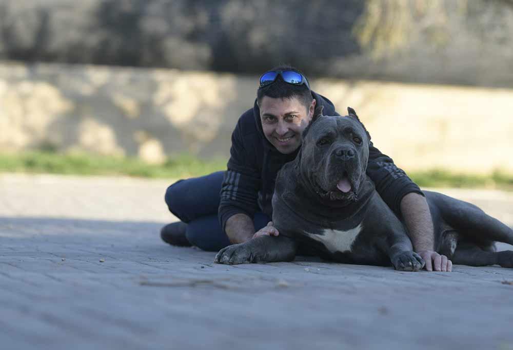 comprar cane corso y cachorros de cane corso en Maracaibo Venezuela1