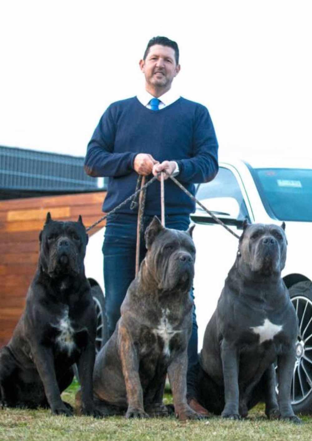comprar cane corso y venta de cachorros de cane corso en Lima Peru Criadores de cancorso
