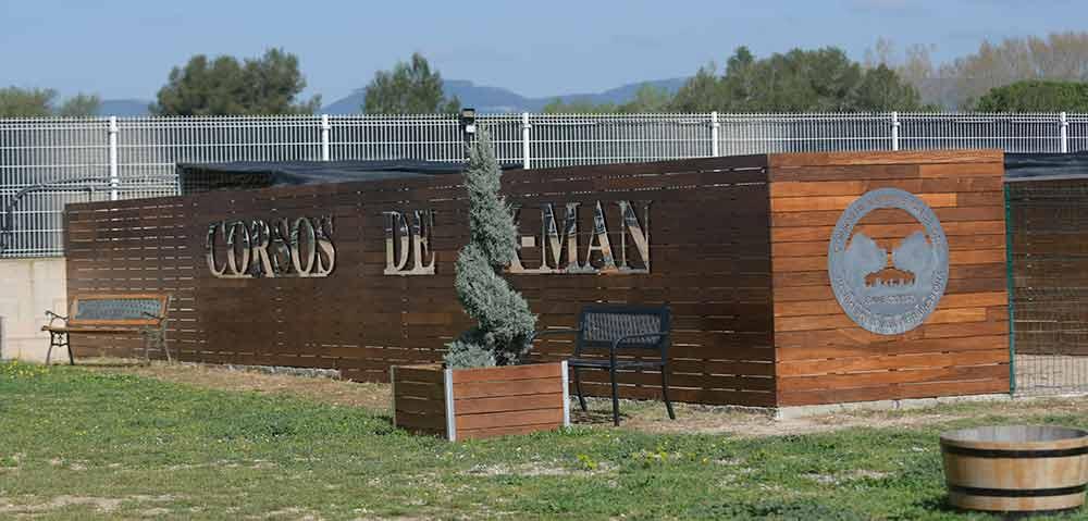Buy cane corso in Colorado springs and breeders of italian mastiff in Colorado2