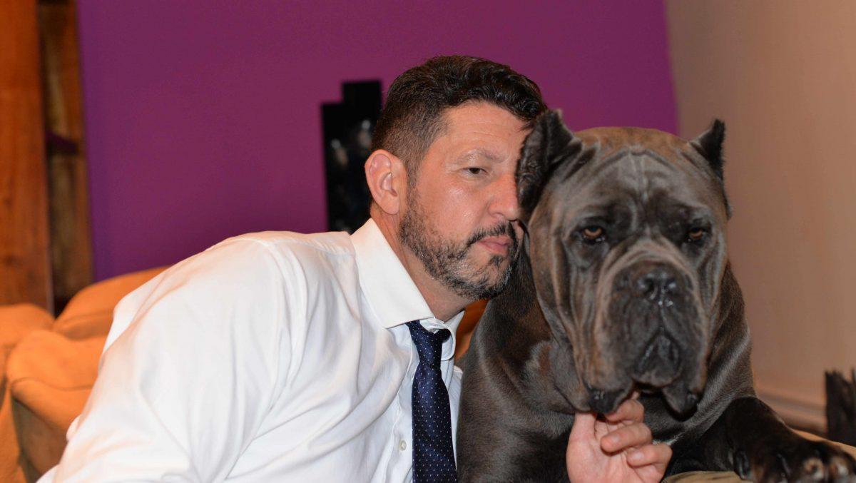Comprar cachorros cane corso en Bilbao. Nos dedicamos a la venta de perros Cane Corso en el pais vasco3