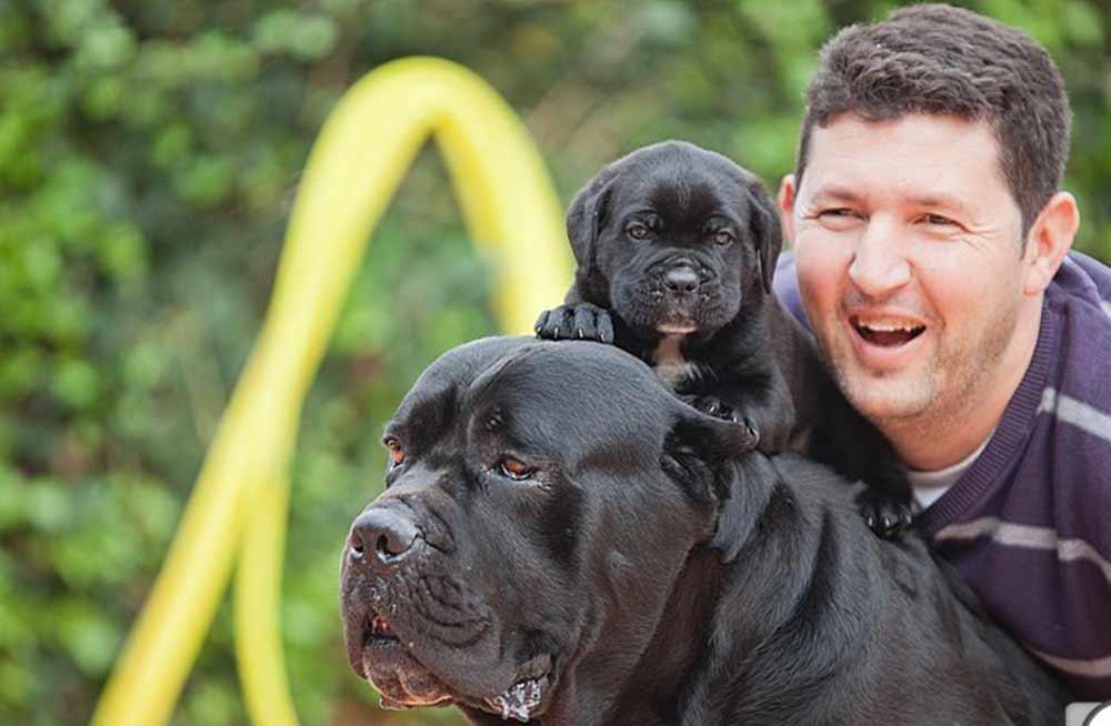 Comprar cachorros cane corso en Valencia. Nos dedicamos a la venta de perros Cane Corso en el Comunidad Valenciana4