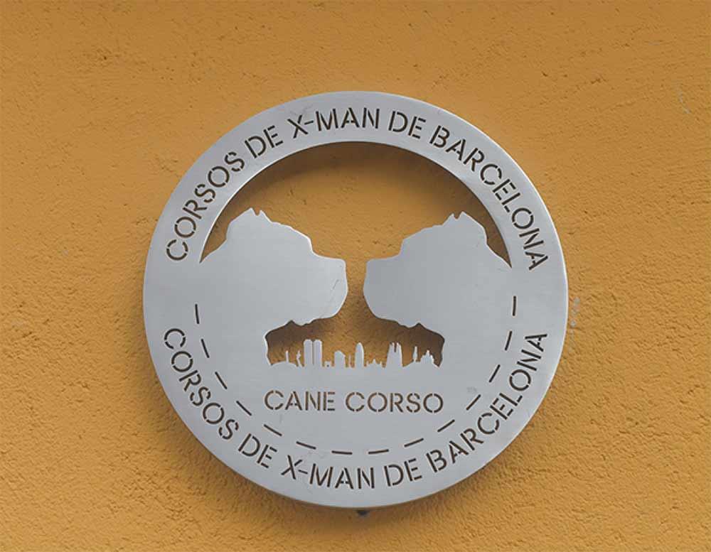 Criadores de perro cane corso en ciudad de mexico2
