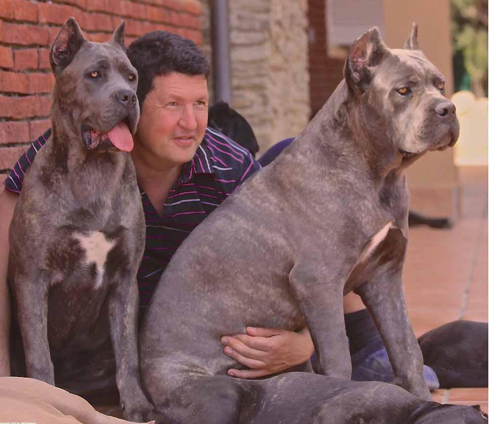 Donde comprar cane corso y Venta de cachorros de cane corso italiano en Jalisco Mexico1
