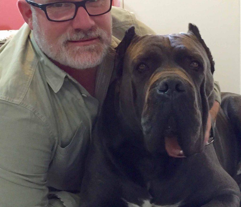 Donde comprar cane corso y venta de cachorros en Tijuana Mexico2