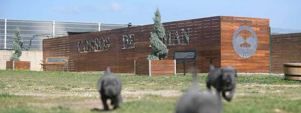 Donde comprar perro cane corso en Palma de Mallorca y criadores de cane corso en Islas Baleares2