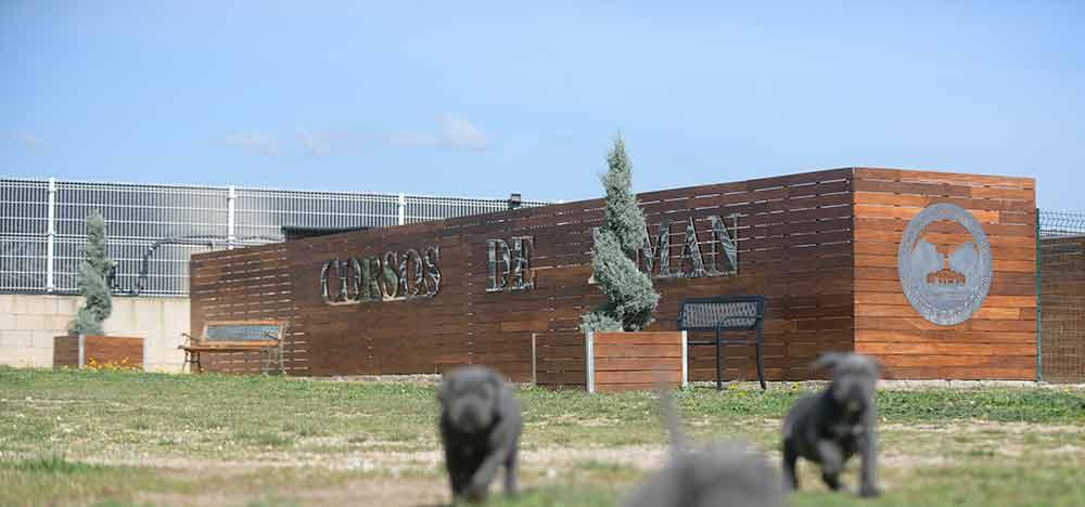 Donde comprar perro cane corso y Venta de cachorros de cane corso en Bilbao2