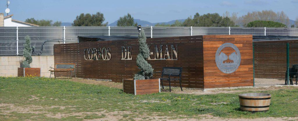 Donde comprar un cane corso en Cadiz y Criadores de cane corso en Andalucia2