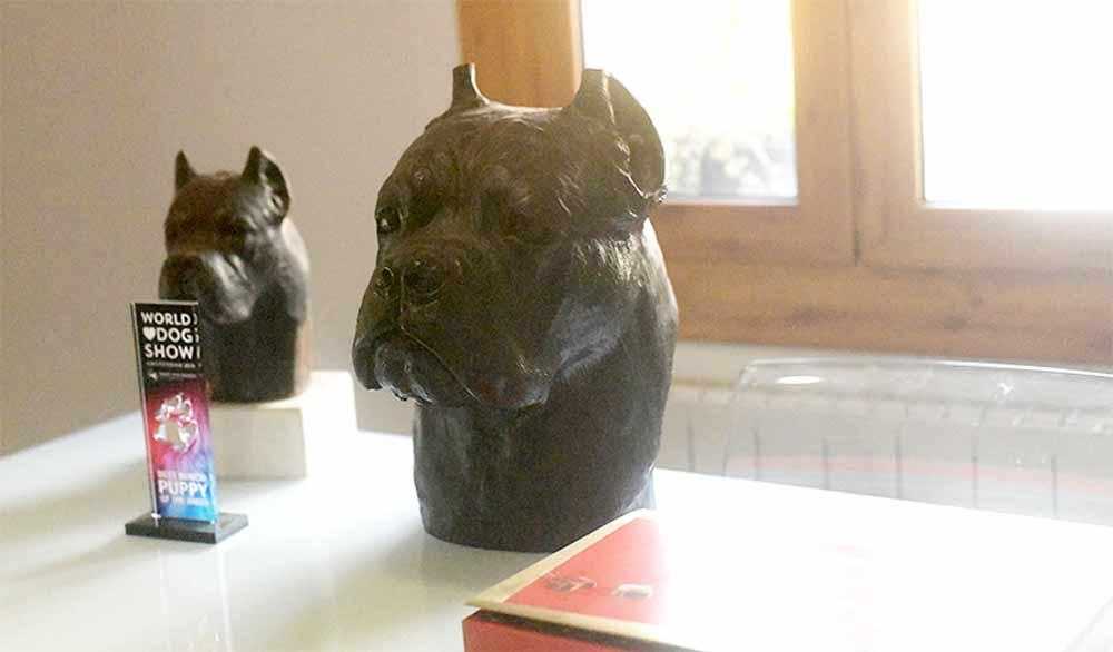 breeders of italian mastiff and cane corso puppies in oklahoma2