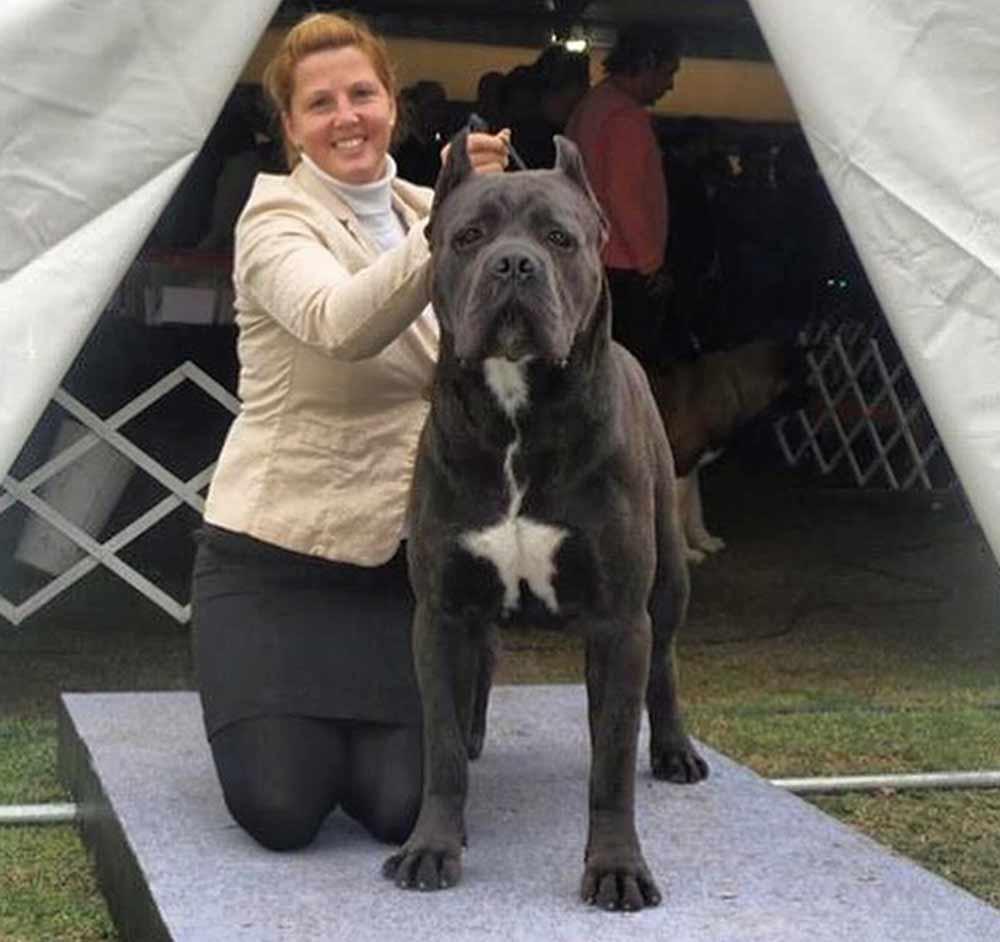 donde comprar cane corso y venta de cachorros de cane corso en Puebla Mexico3