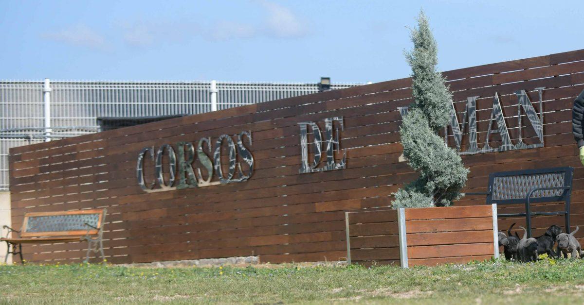 Comprar perro cane corso italiano en Palencia Y criadores de canecorso en Castilla leon