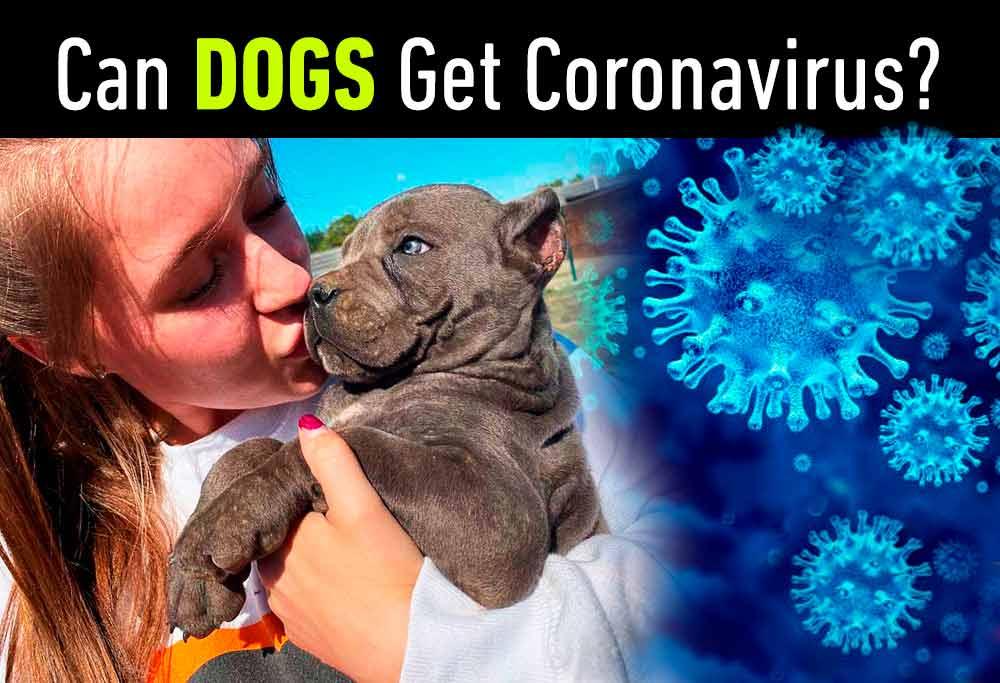Covid-19 Coronavirus in Dogs