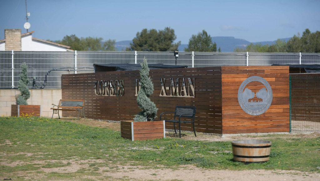 Donde comprar cachorros de cane corso en Granada y criadores de cane corso en Andalucia1