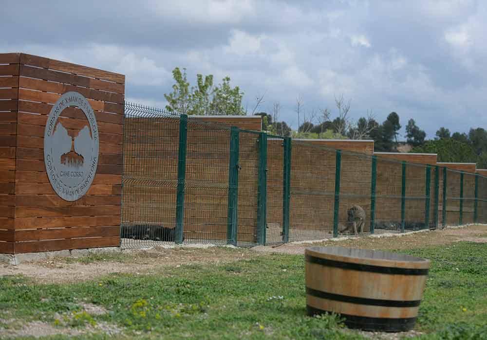 Donde comprar perro cane corso italiano en Benidorm y criadores de cane corso en Alicante