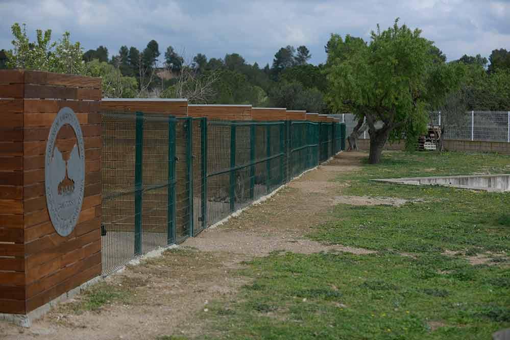 Donde comprar un perro cane corso en Orihuela Y Criadores de canecorso Italiano en Alicante1