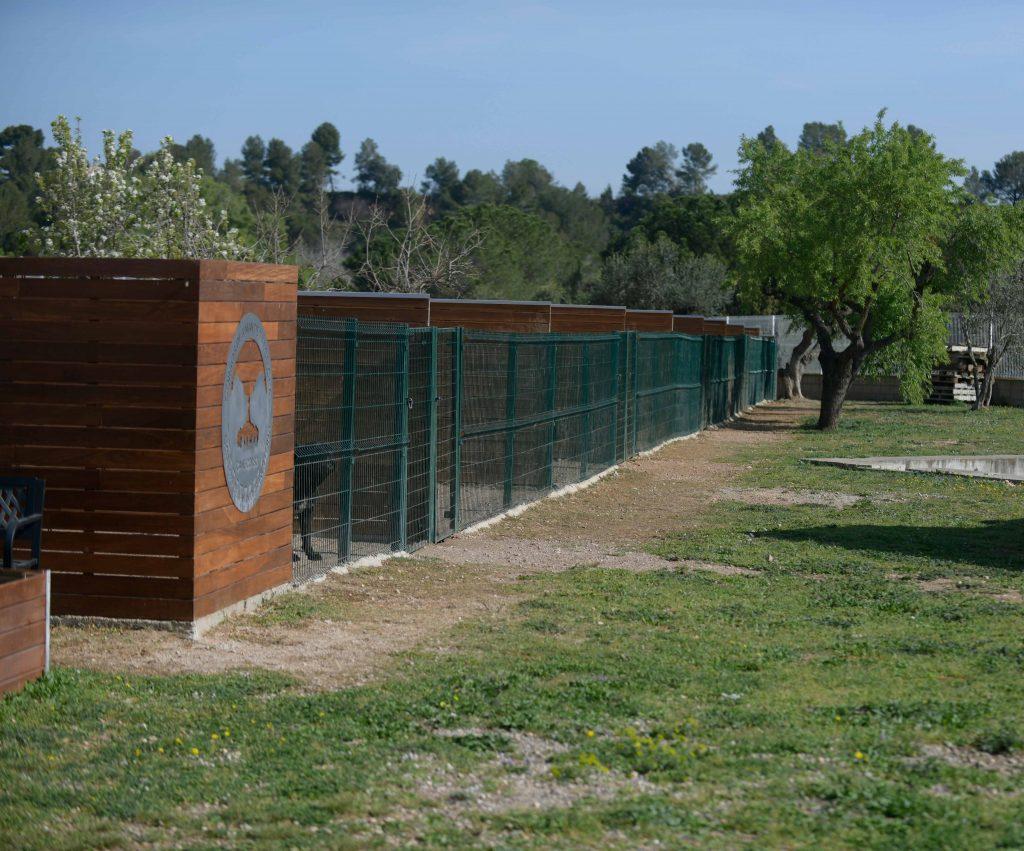 Where buy canecorsos puppies and breeders of italian mastiff in Dakota North