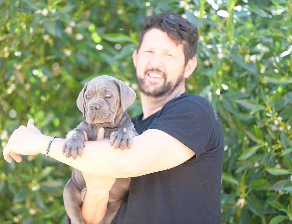 where buy cane corso puppies in alexandria and breeders of canecorso in Virginia1