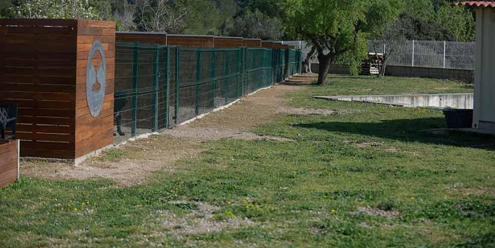 where buy cane corso puppy in Moreno Valley and for sale cane corso puppy in California1