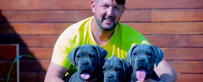 El perro Cane Corso Italiano aspecto y características generales