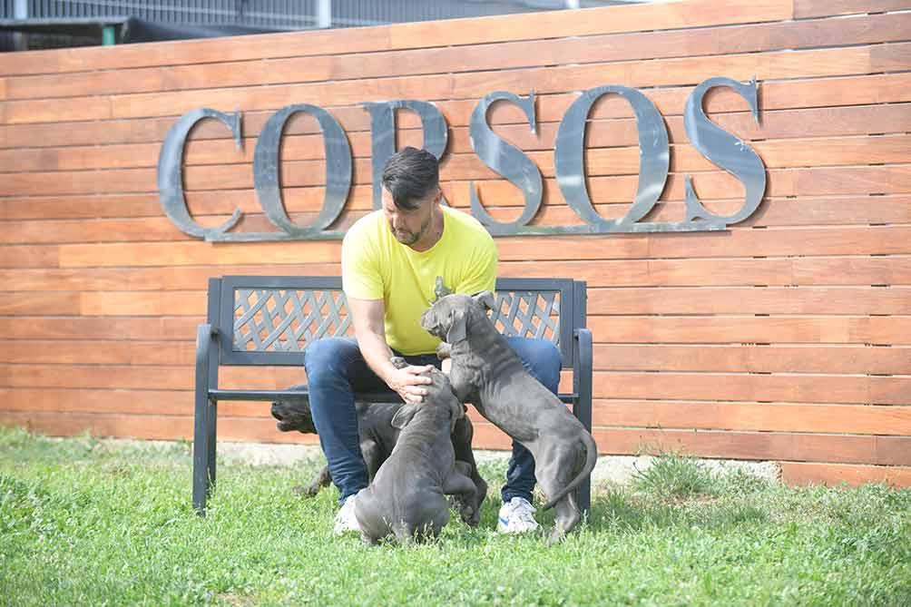 Venta de cachorros de Cane Corso en Isla de Vieques y comprar cachorro de canecorso en Puerto Rico