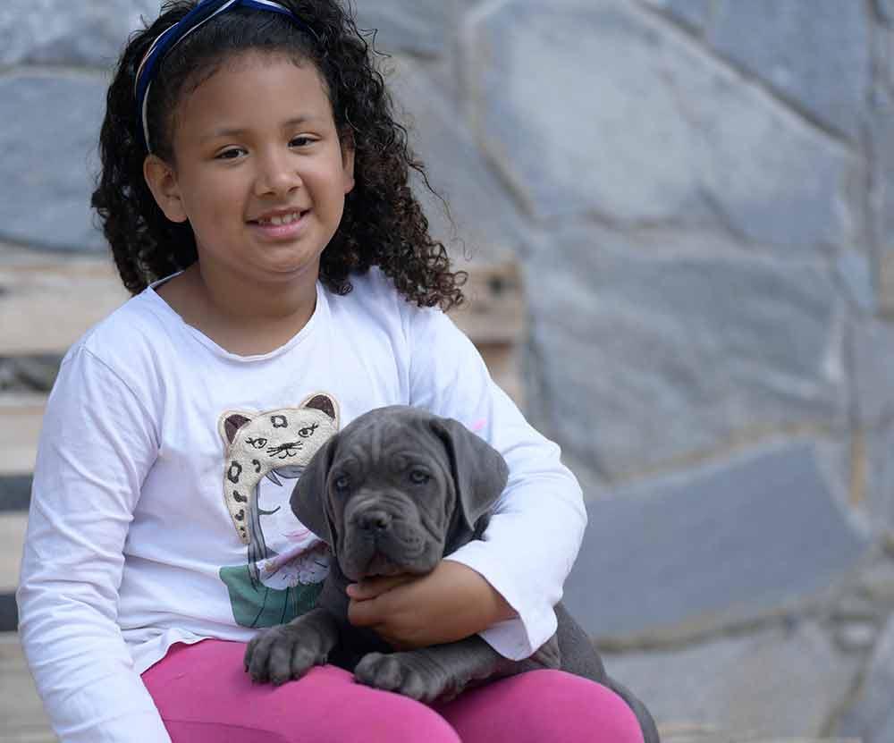 buy cane corso puppies in Lakewood and breeders of Italian mastiff in Colorado1